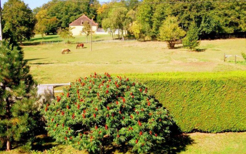 gite-la-petite-maison-diges-puisaye-yonne-bourgogne-11