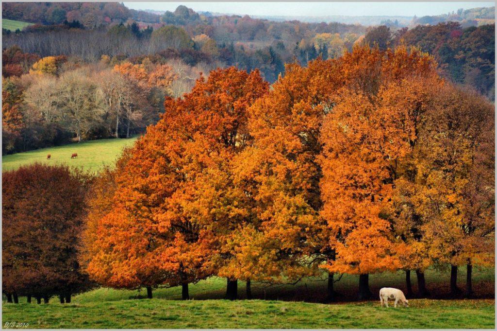 L'automne en Puisaye et ses paysages - ©Daniel Salem