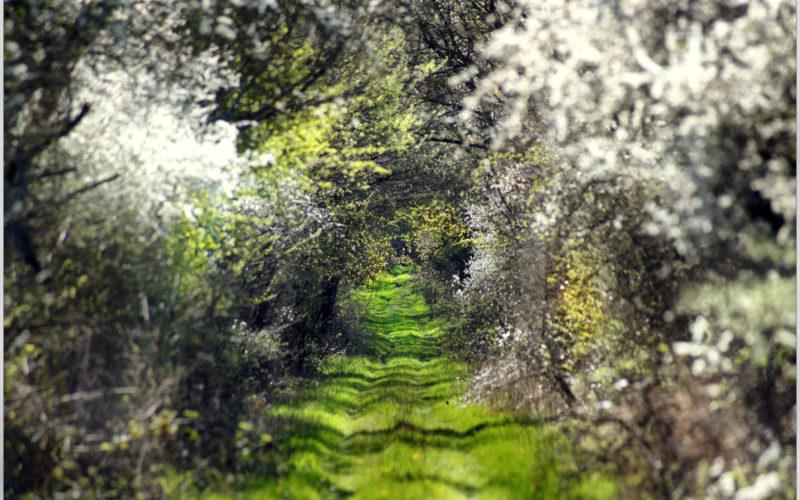 Voûte végétale dans un chemin de randonnée en Puisaye – ©Daniel Salem