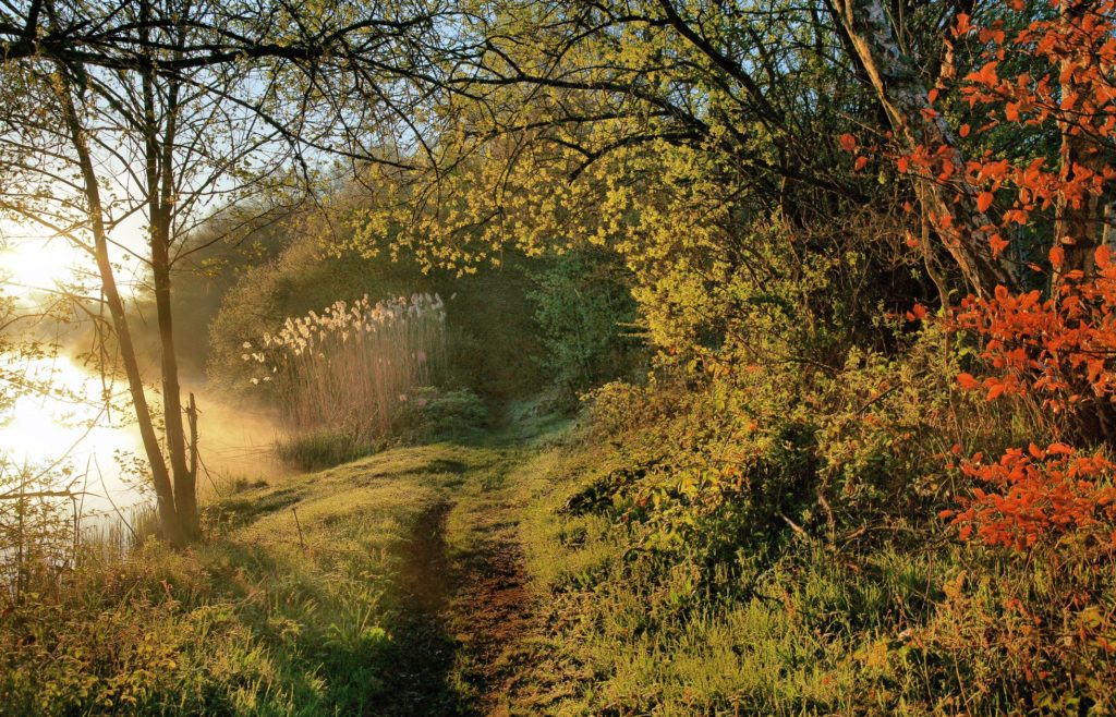 Chemin de randonnée en Puisaye