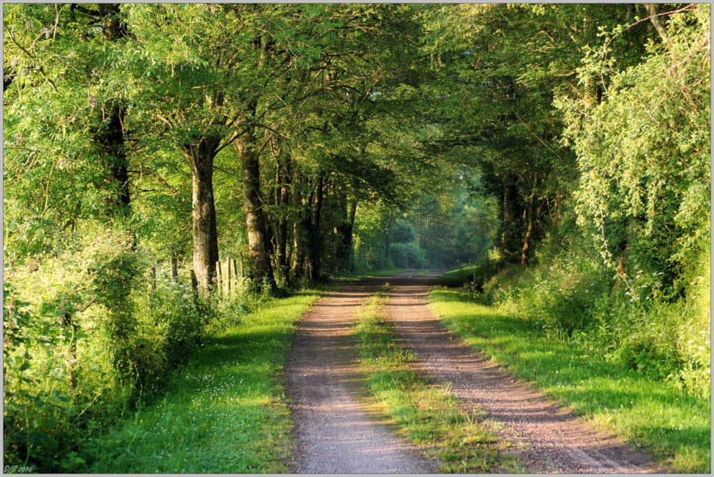 Chemin creux de Puisaye - © Daniel Salem