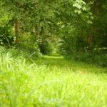 Chemin de randonnée à Grandchamp