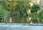 La rivière du Branlin à Mezilles – ©Daniel Salem