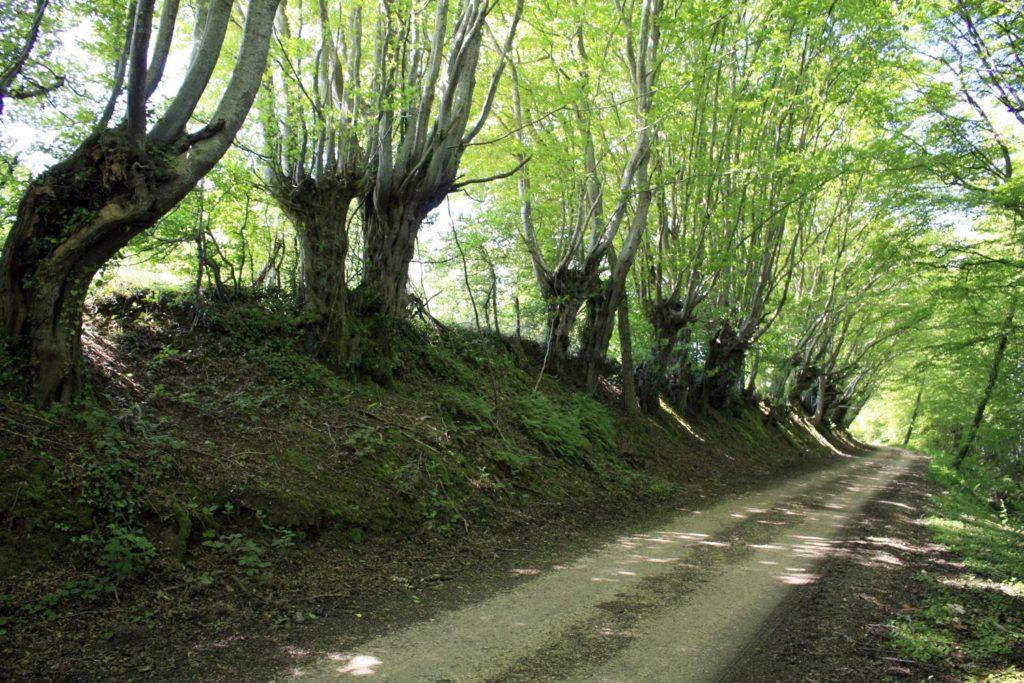 Circuit de randonnée à Treigny