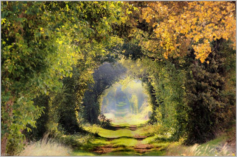 Randonnée en automne en Puisaye ©Daniel Salem