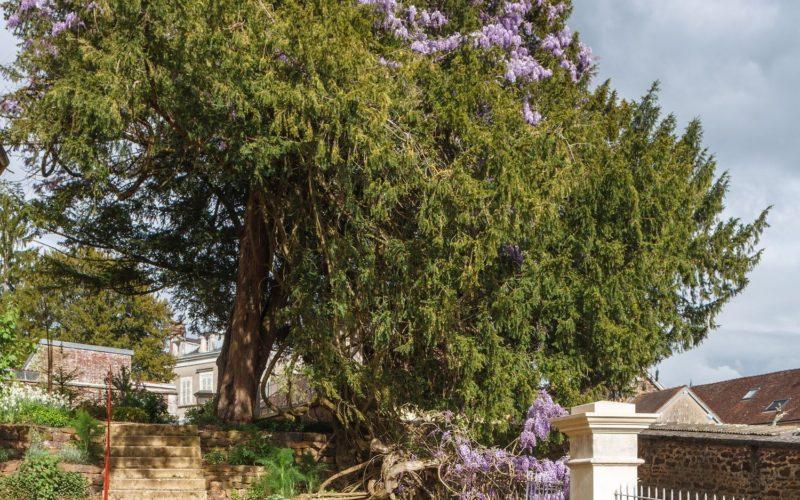 Maison de Colette, Jardin, Crédit photo Nicolas Castets