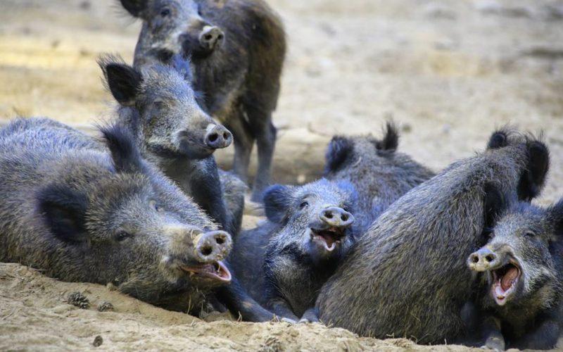 Parc animalier de Boutissaint – ©alecs4284