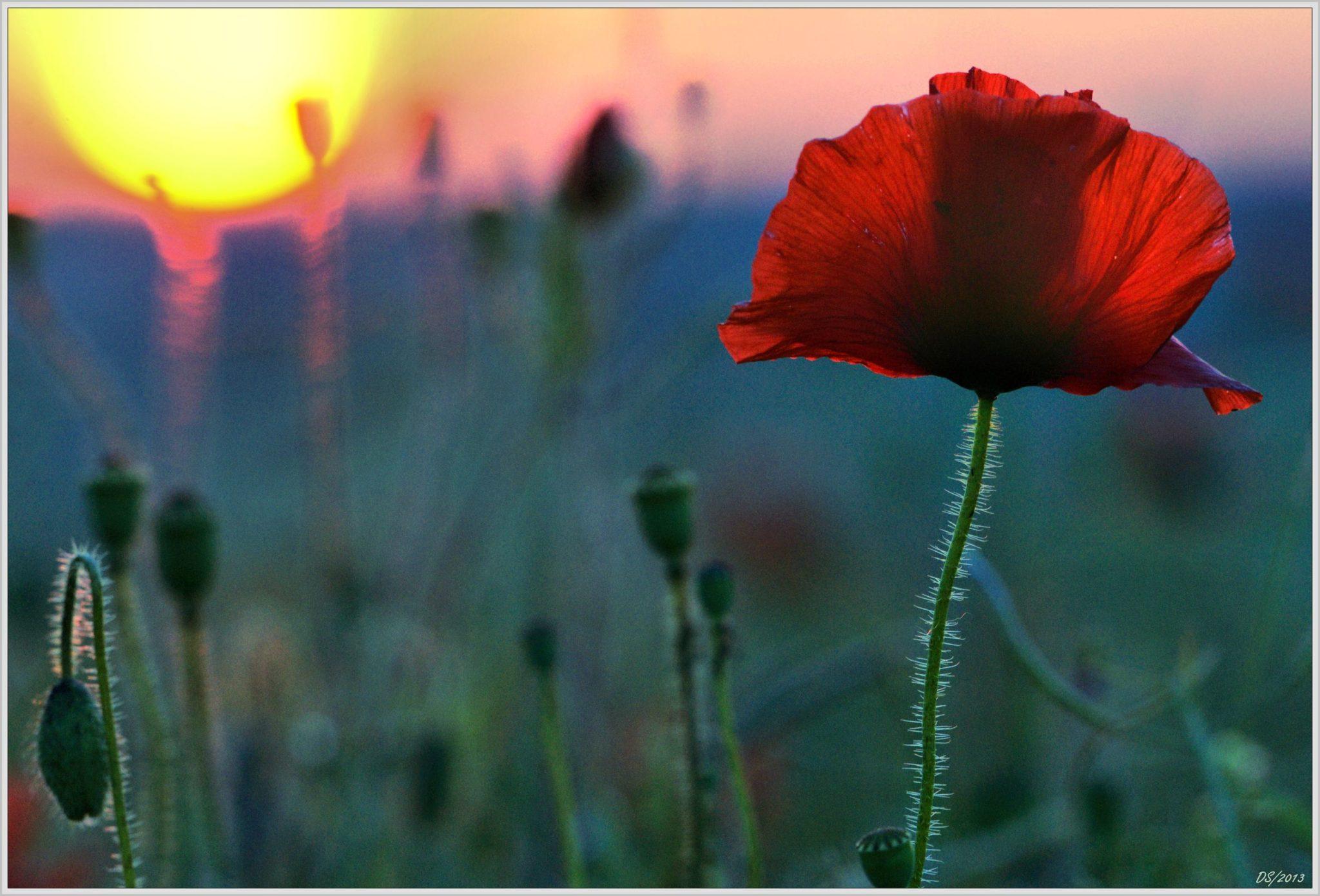 Flore de Puisaye