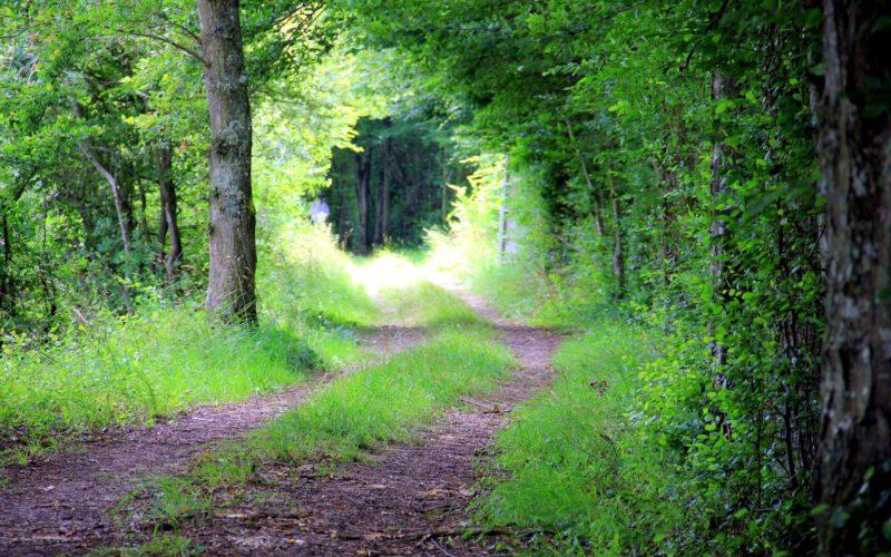 Chemin de randonnée en Puisaye – ©Monique.T