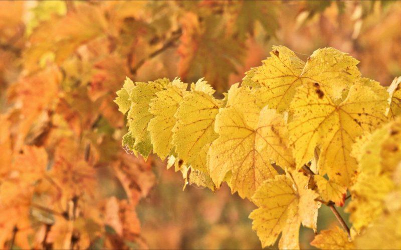 Les vignobles dans l'Yonne – ©Daniel Salem