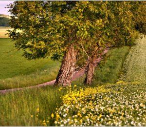 Petite route de Forterre – ©Daniel Salem