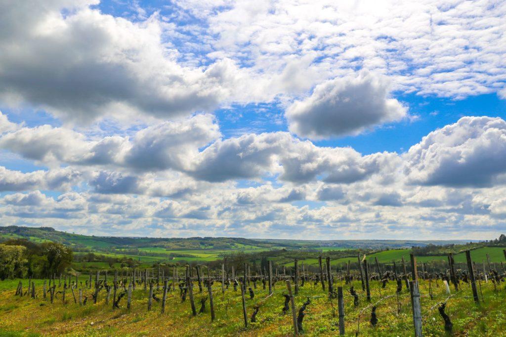 Les vignobles de Vézelay