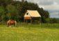 Hébergements-insolits-montagne-aux-alouettes-lainsecq-puisaye-yonne-bourgogne-guédelon (5)