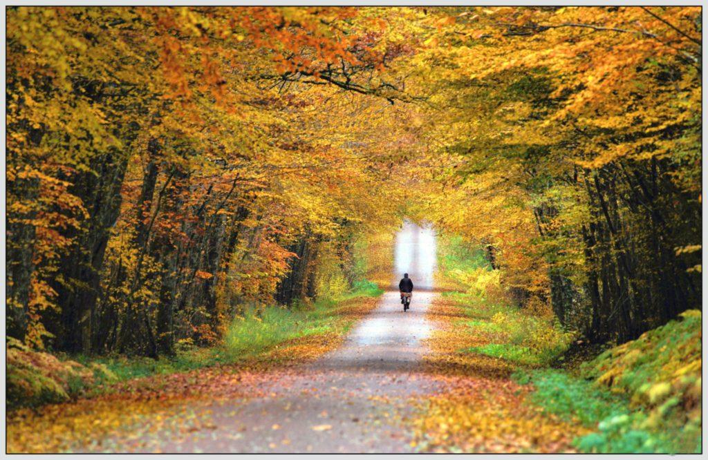 Paysage d'automne en Puisaye - ©Daniel Salem