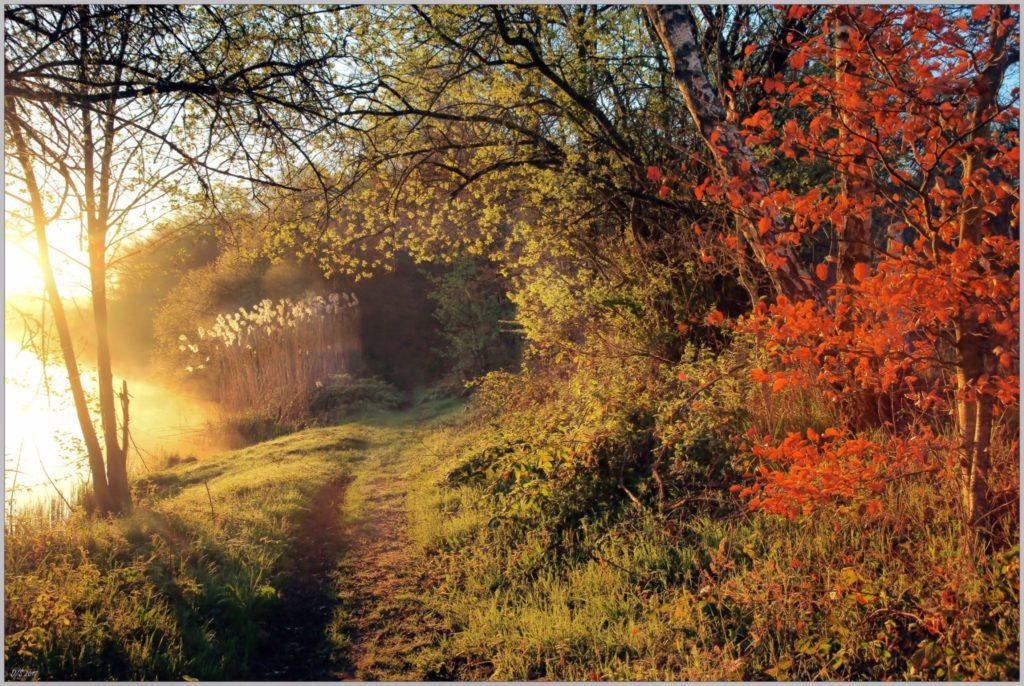 Petit chemin, le long de l'étang de Moutiers en Puisaye - ©Daniel Salem