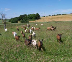 Chèvrerie de la vallée des dorins – Villefranche saint-phal