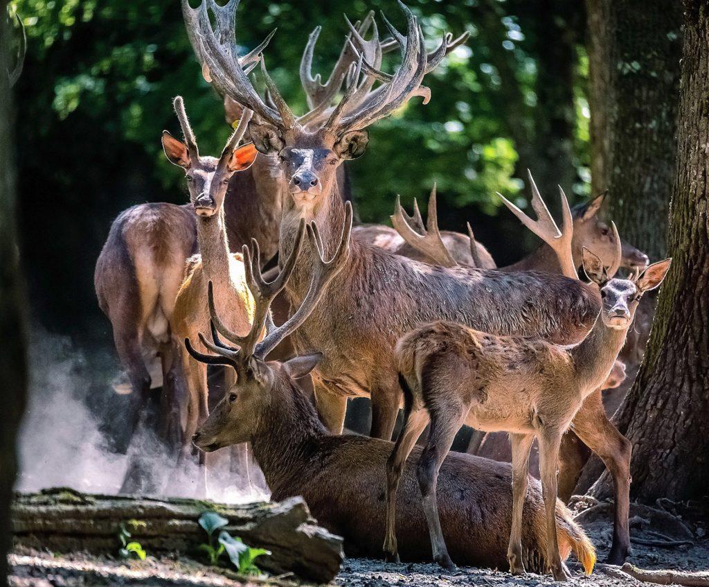 Parc animalier de Boutissaint - Treigny