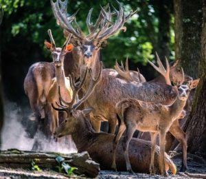 Parc animalier de Boutissaint – Treigny Michel-Orriger