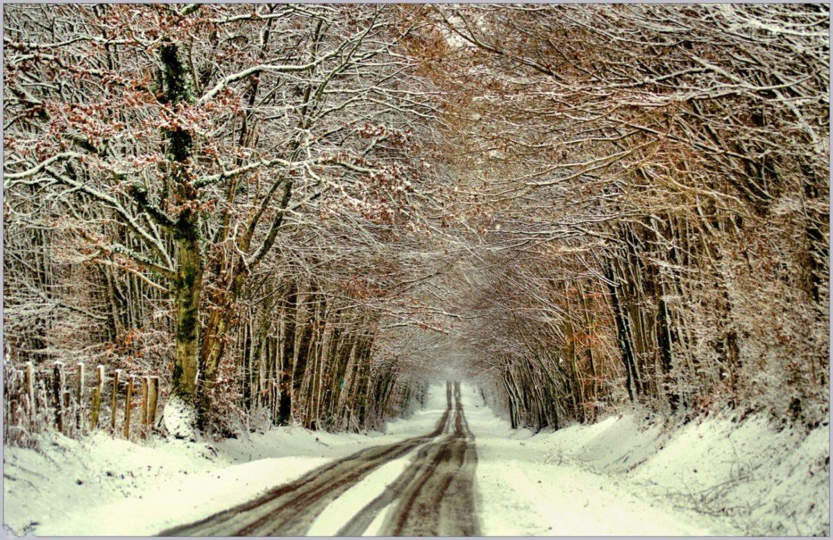 DECEMBRE - Petite route de Puisaye enneigée en hiver©Daniel Salem