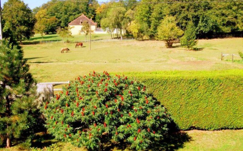 Gîte la petite maison-diges-puisaye-yonne-bourgogne (11)