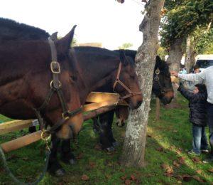 chevaux saint simon