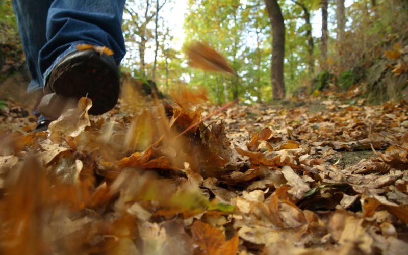 automne marche rando forêt