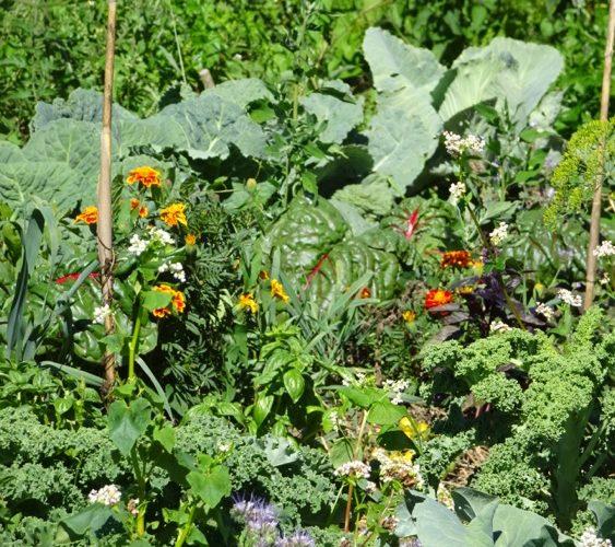 image jardin permaculture 2