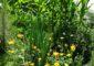 image jardin permaculture