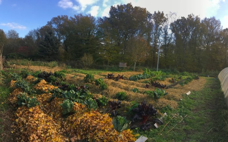 image permaculture 3