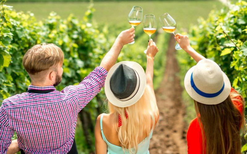 Wine degustation on the vineyard