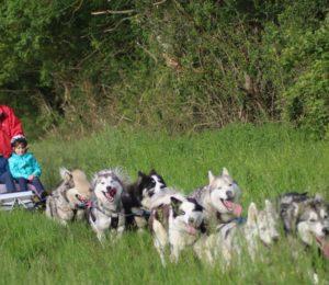 The-wild-spark-cani-rando-puisaye-yonne-bourgogne (1)