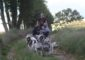 The-wild-spark-cani-rando-puisaye-yonne-bourgogne (2)