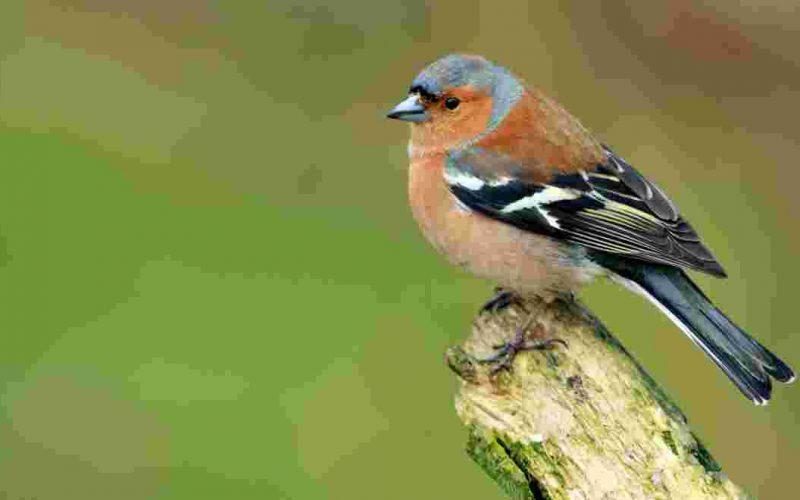 ce-week-end-la-lpo-vous-donne-rendez-vous-au-jardin-pour-compter-les-oiseaux