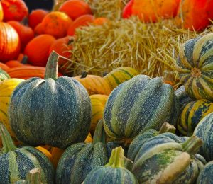 pumpkin-567689_1920