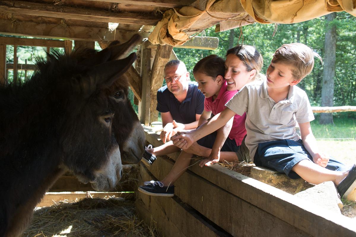 Les visiteurs chez les ânes