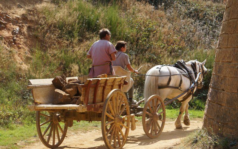 Les chevaux de trait assurent le transport de matériaux sur le chantier
